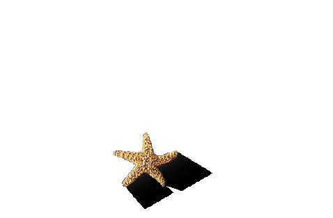 Diseño-Tráfico-Caribe-Estudio-Playa-del-Carmen-Logotype_Design